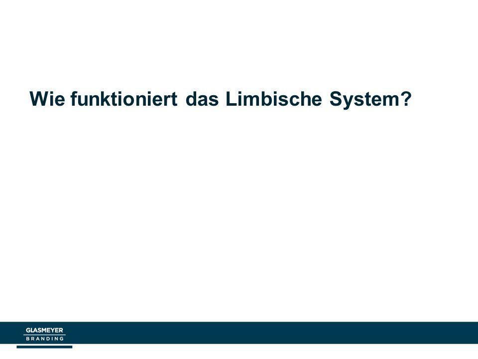 Wie funktioniert das Limbische System