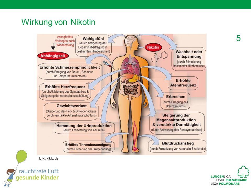 Wirkung von Nikotin Nikotin gelangt in etwa sieben Sekunden über die Lunge ins Blut und anschliessend ins Gehirn.
