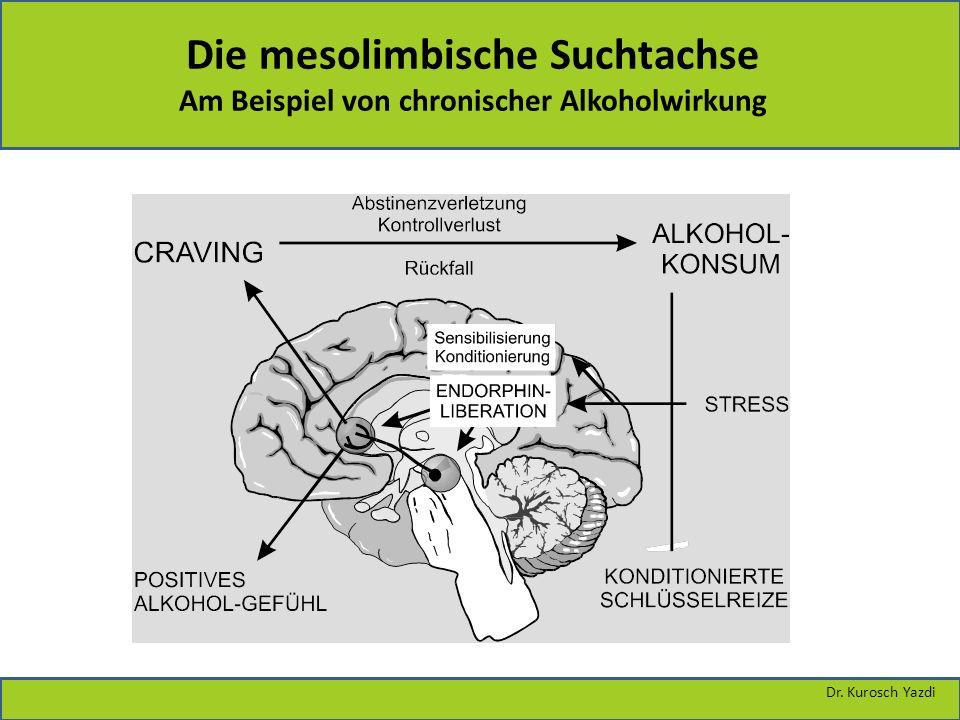 Die mesolimbische Suchtachse Am Beispiel von chronischer Alkoholwirkung