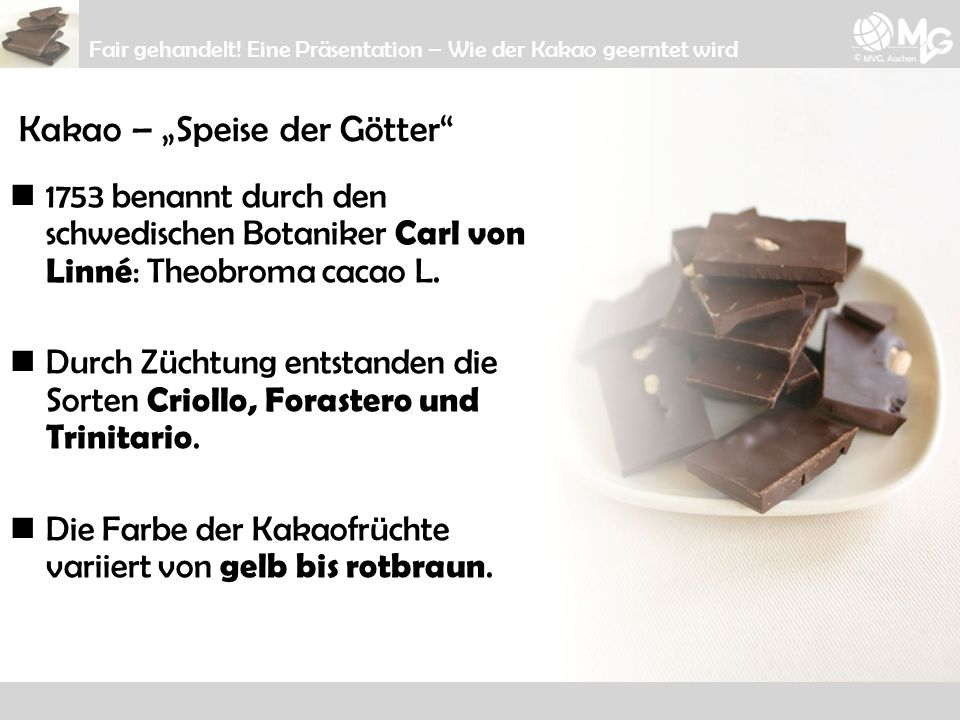 "Kakao – ""Speise der Götter"