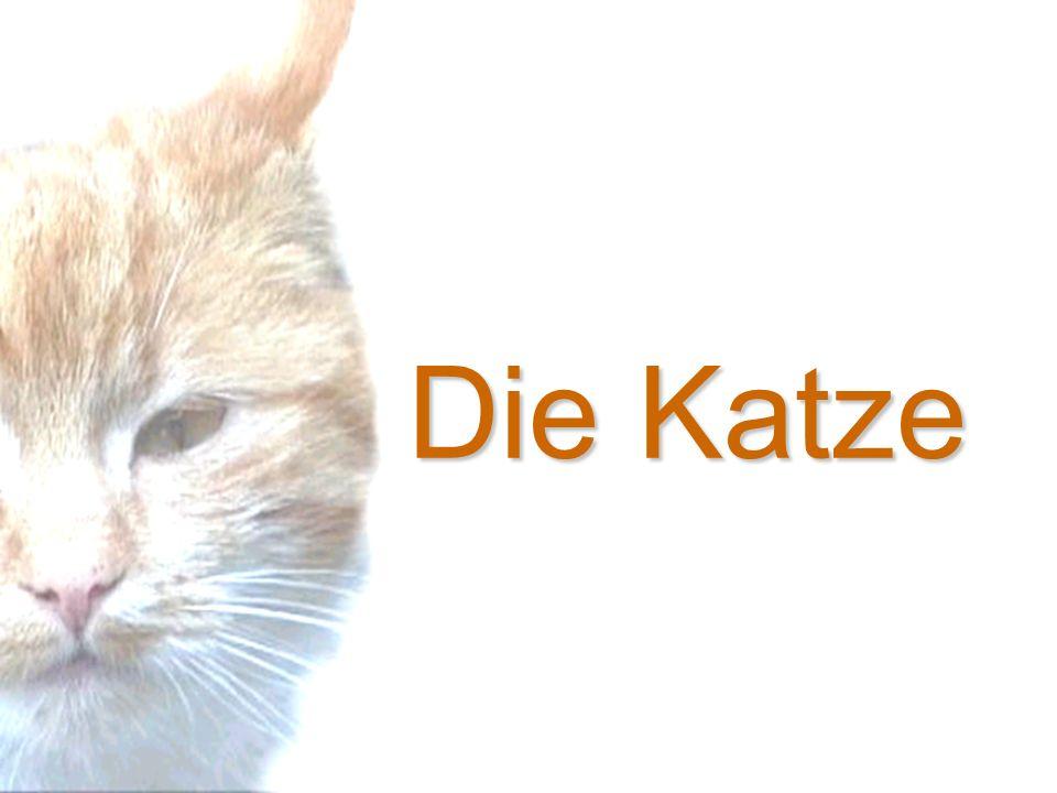 Ausgezeichnet Außen Katze Anatomie Galerie - Anatomie Ideen ...