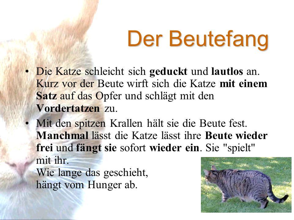 Gemütlich Katze Dissektion Anatomie Ideen - Anatomie Ideen - finotti ...
