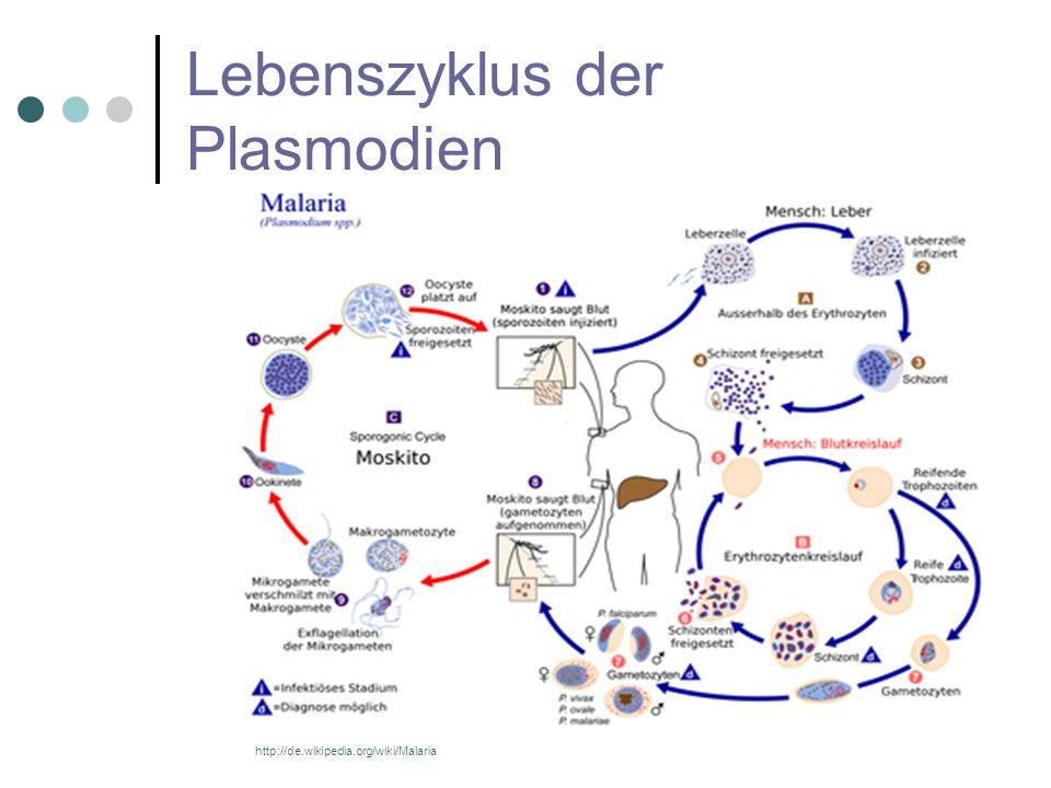 Lebenszyklus der Plasmodien
