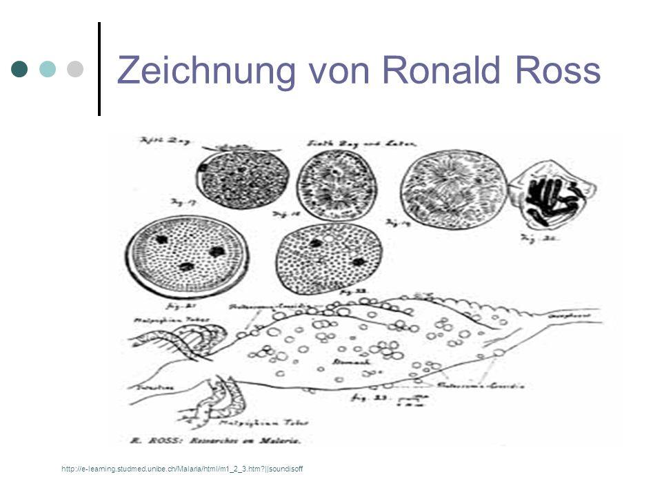 Zeichnung von Ronald Ross