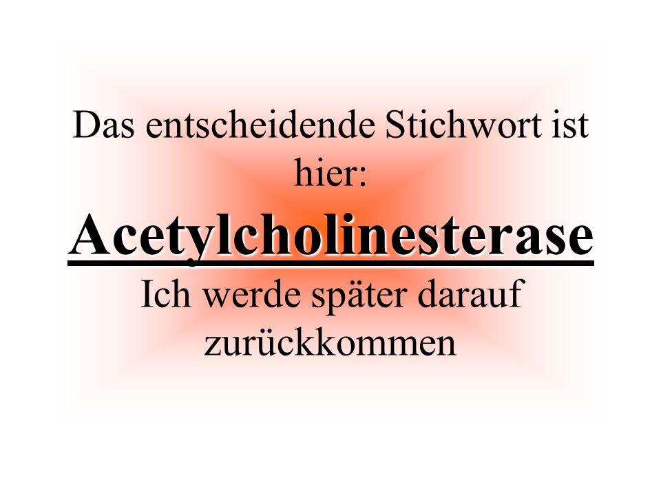 Das entscheidende Stichwort ist hier: Acetylcholinesterase Ich werde später darauf zurückkommen