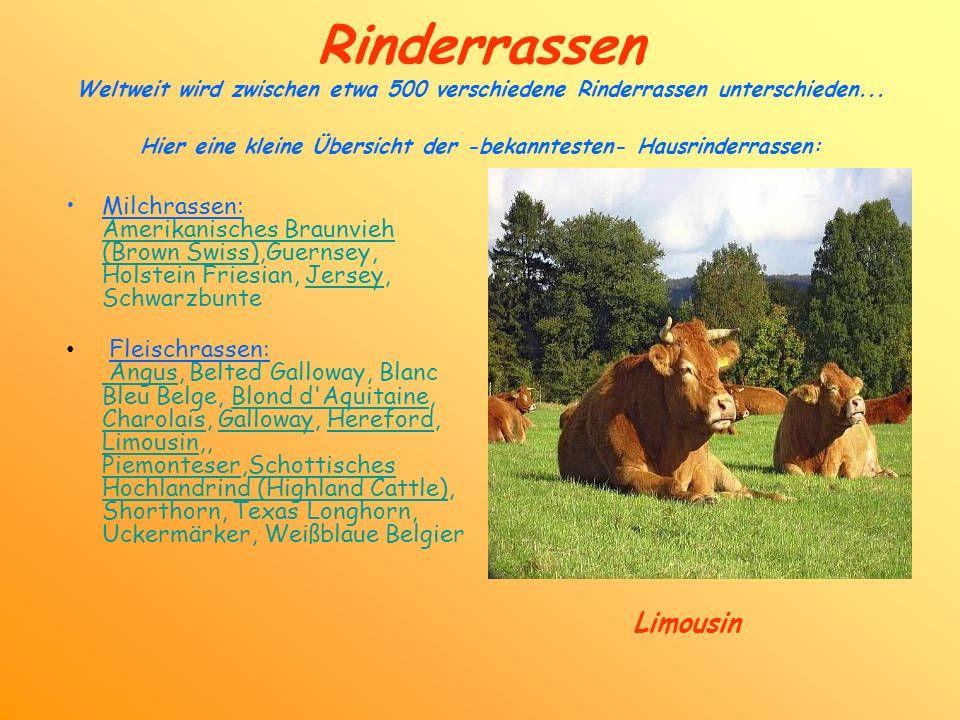 Rinderrassen Weltweit wird zwischen etwa 500 verschiedene Rinderrassen unterschieden... Hier eine kleine Übersicht der -bekanntesten- Hausrinderrassen: