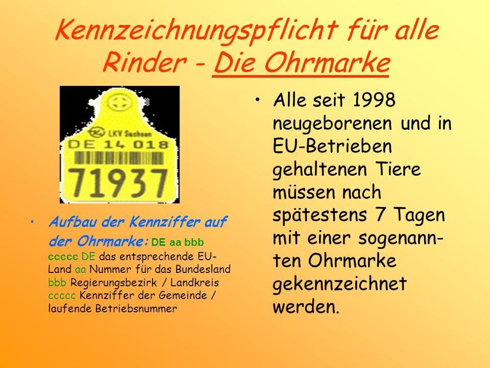 Kennzeichnungspflicht für alle Rinder - Die Ohrmarke