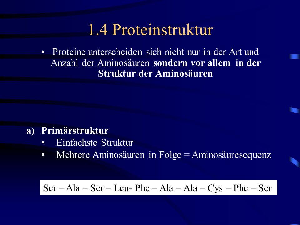 1.4 ProteinstrukturProteine unterscheiden sich nicht nur in der Art und Anzahl der Aminosäuren sondern vor allem in der Struktur der Aminosäuren.