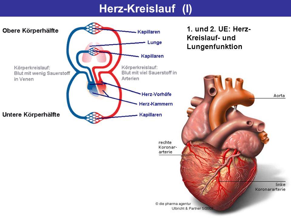 Herz-Kreislauf (I) 1. und 2. UE: Herz-Kreislauf- und Lungenfunktion