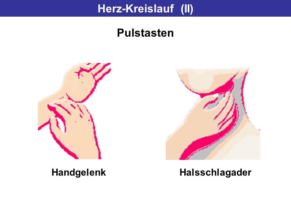 Herz-Kreislauf (II) Pulstasten