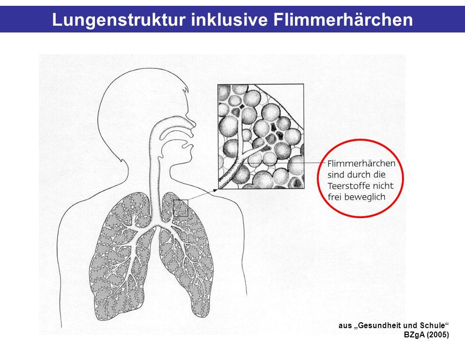 Lungenstruktur inklusive Flimmerhärchen