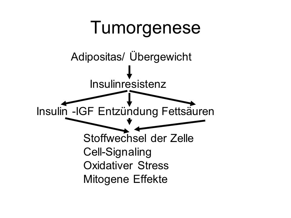 Tumorgenese Adipositas/ Übergewicht Insulinresistenz