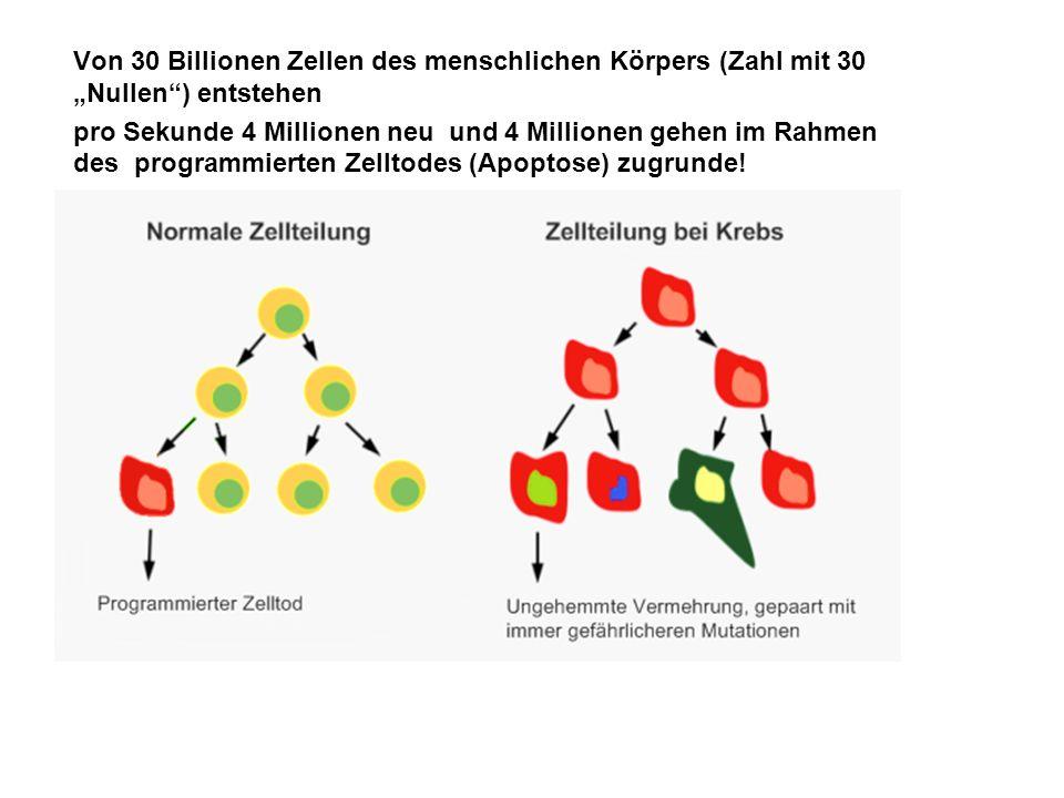 """Von 30 Billionen Zellen des menschlichen Körpers (Zahl mit 30 """"Nullen ) entstehen"""