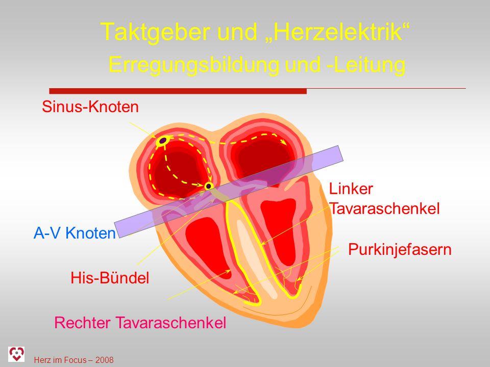 """Taktgeber und """"Herzelektrik"""