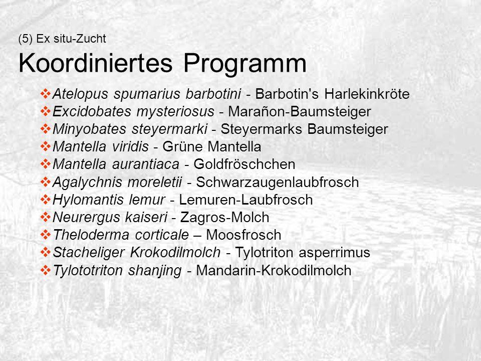 Koordiniertes Programm