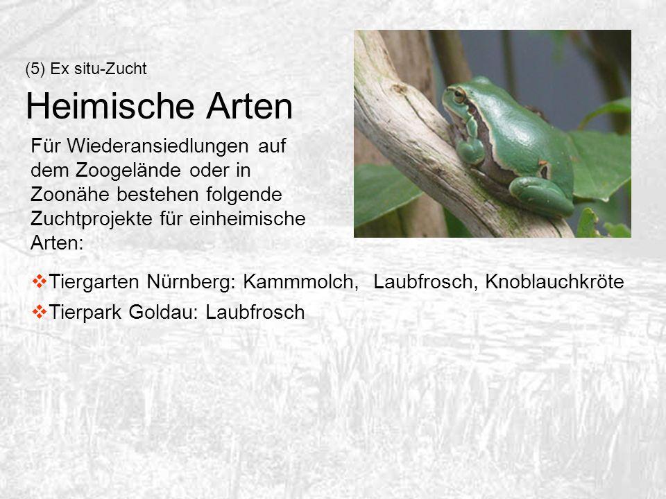 (5) Ex situ-Zucht Heimische Arten.