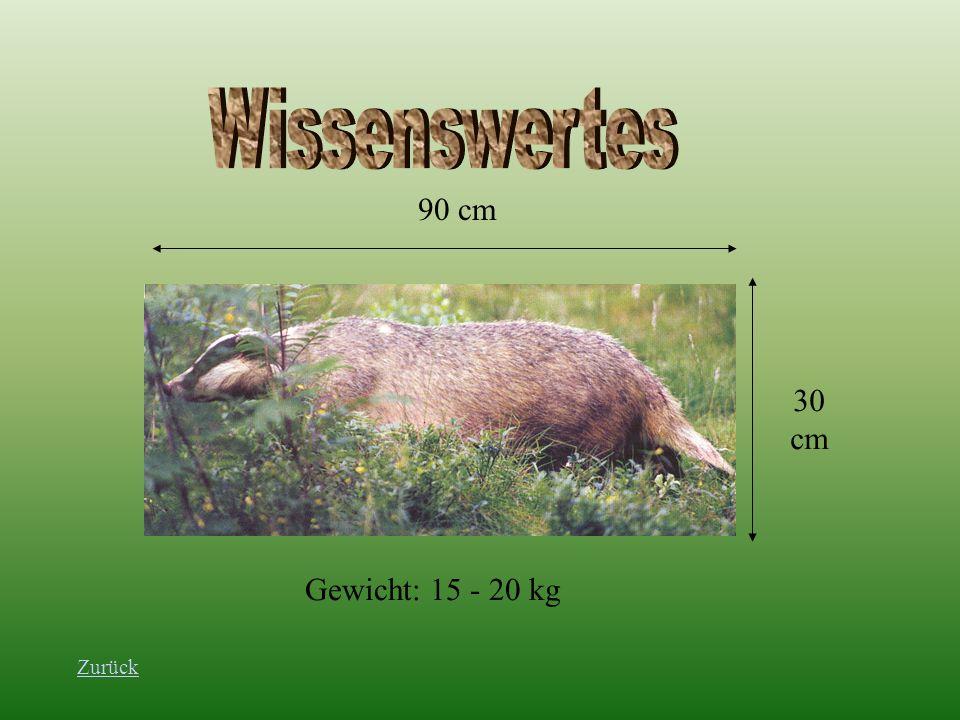Wissenswertes 90 cm 30 cm Gewicht: 15 - 20 kg Zurück