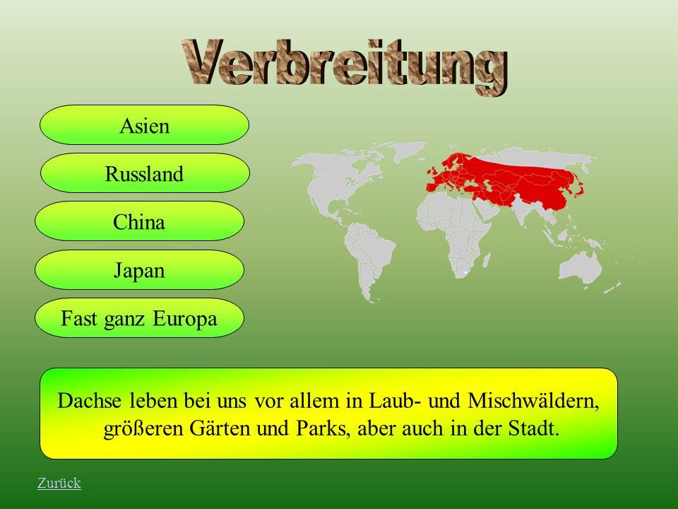 Verbreitung Asien Russland China Japan Fast ganz Europa