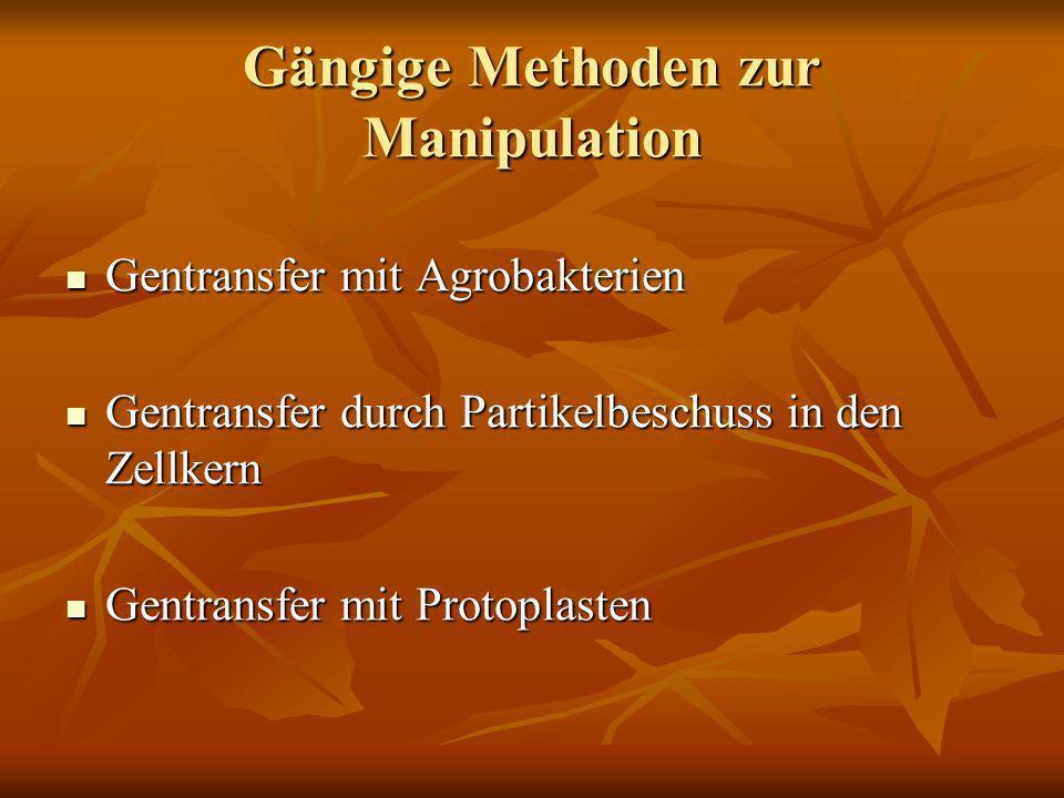 Gängige Methoden zur Manipulation