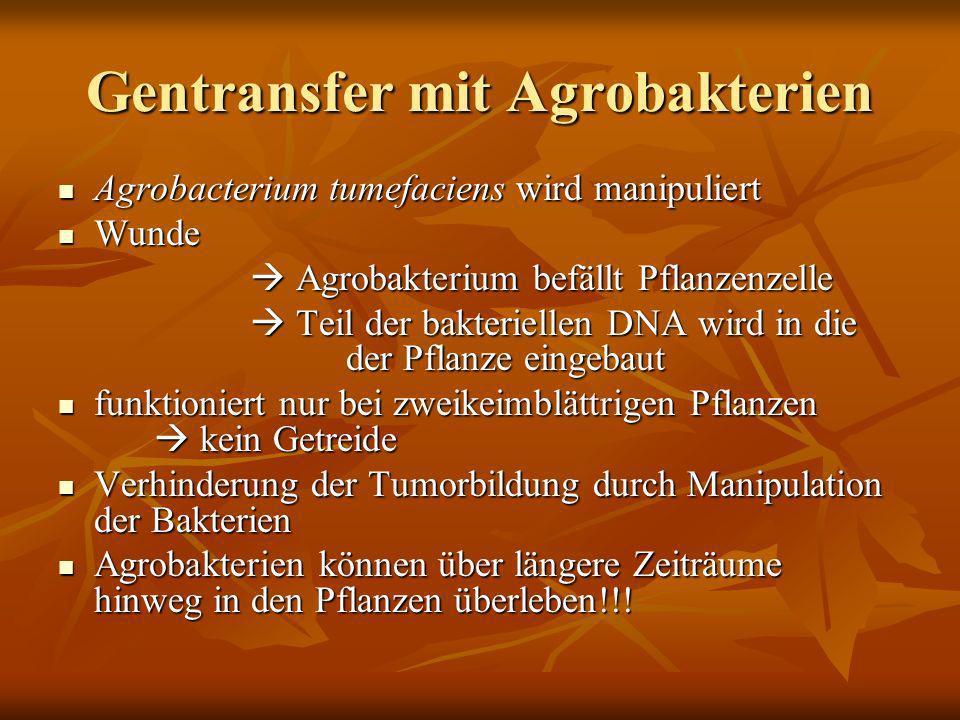 Gentransfer mit Agrobakterien