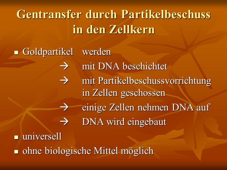 Gentransfer durch Partikelbeschuss in den Zellkern