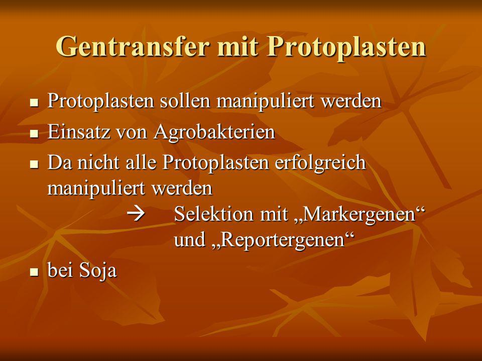 Gentransfer mit Protoplasten