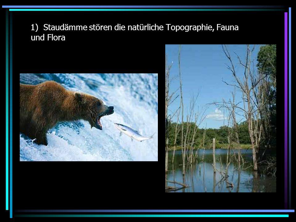 Staudämme stören die natürliche Topographie, Fauna und Flora