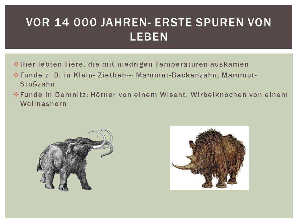 Vor 14 000 Jahren- erste Spuren von Leben