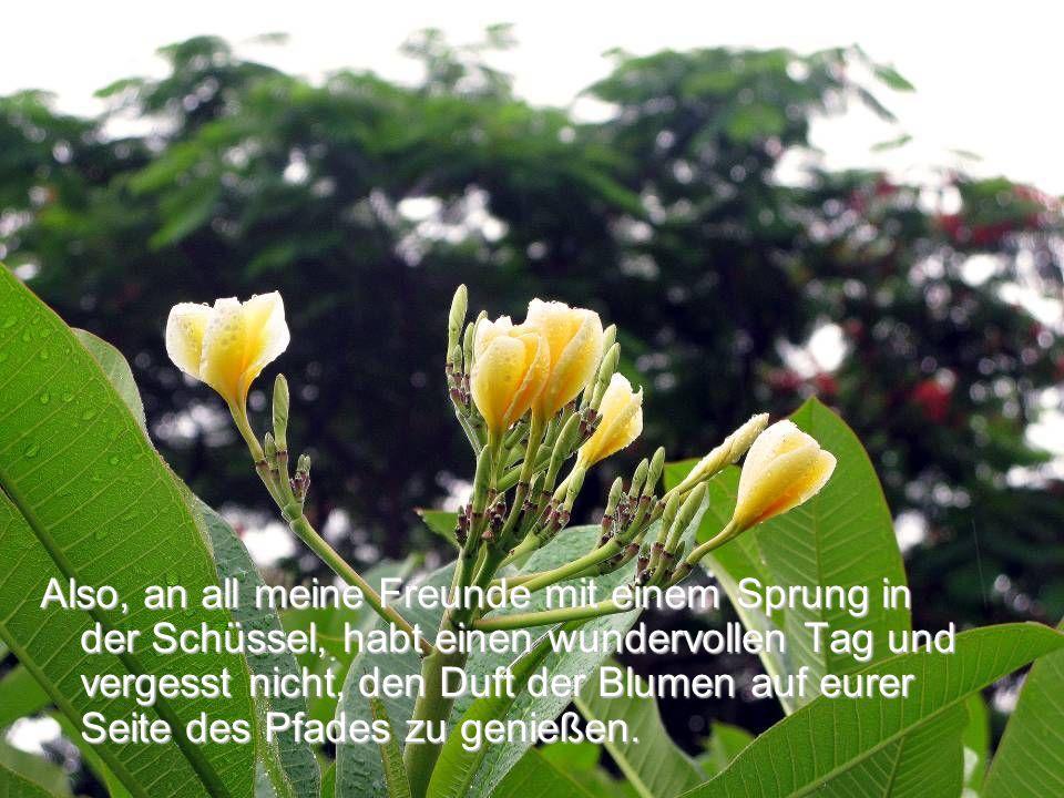 Also, an all meine Freunde mit einem Sprung in der Schüssel, habt einen wundervollen Tag und vergesst nicht, den Duft der Blumen auf eurer Seite des Pfades zu genießen.