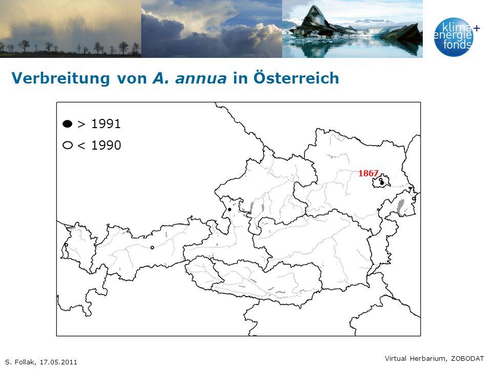 Verbreitung von A. annua in Österreich