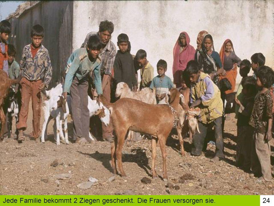 Jede Familie bekommt 2 Ziegen geschenkt. Die Frauen versorgen sie.