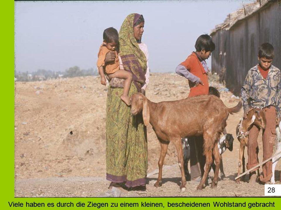 28 Viele haben es durch die Ziegen zu einem kleinen, bescheidenen Wohlstand gebracht.