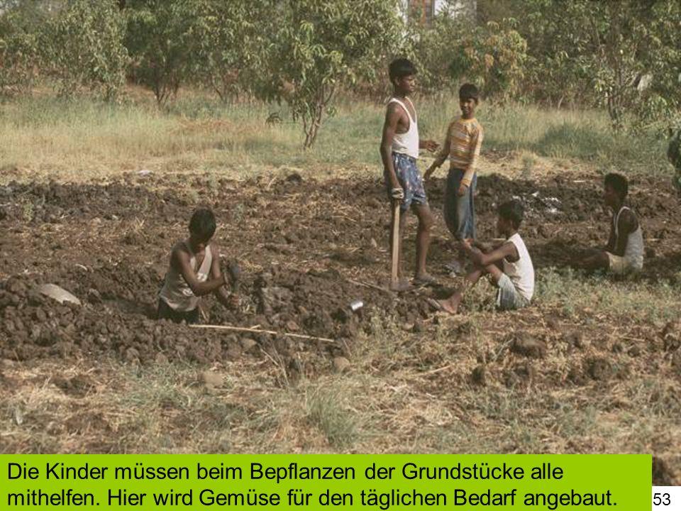 Die Kinder müssen beim Bepflanzen der Grundstücke alle mithelfen