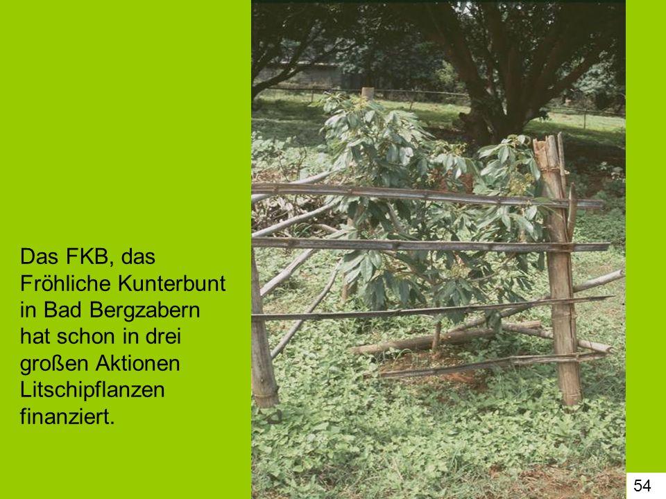 Das FKB, das Fröhliche Kunterbunt in Bad Bergzabern hat schon in drei großen Aktionen Litschipflanzen finanziert.