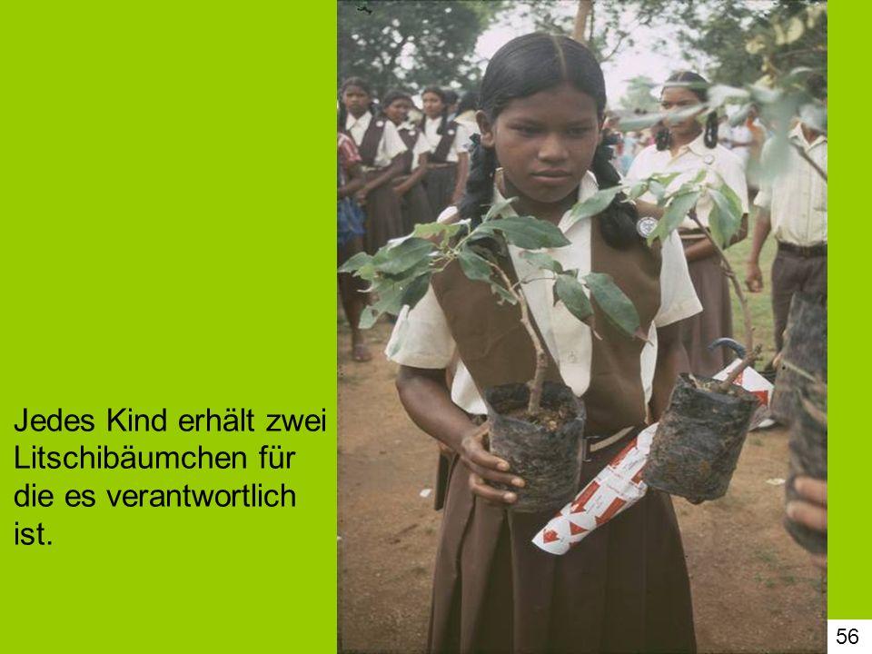 Jedes Kind erhält zwei Litschibäumchen für die es verantwortlich ist.