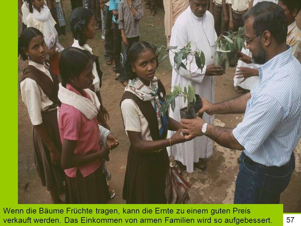 Wenn die Bäume Früchte tragen, kann die Ernte zu einem guten Preis verkauft werden. Das Einkommen von armen Familien wird so aufgebessert.