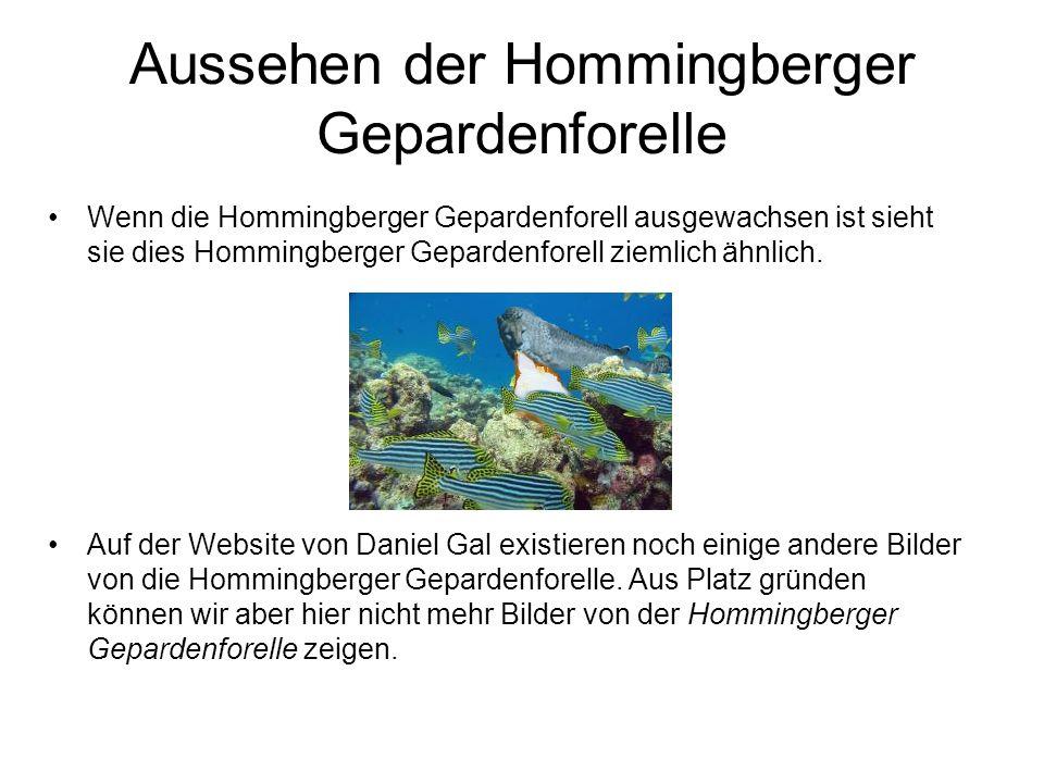 Aussehen der Hommingberger Gepardenforelle