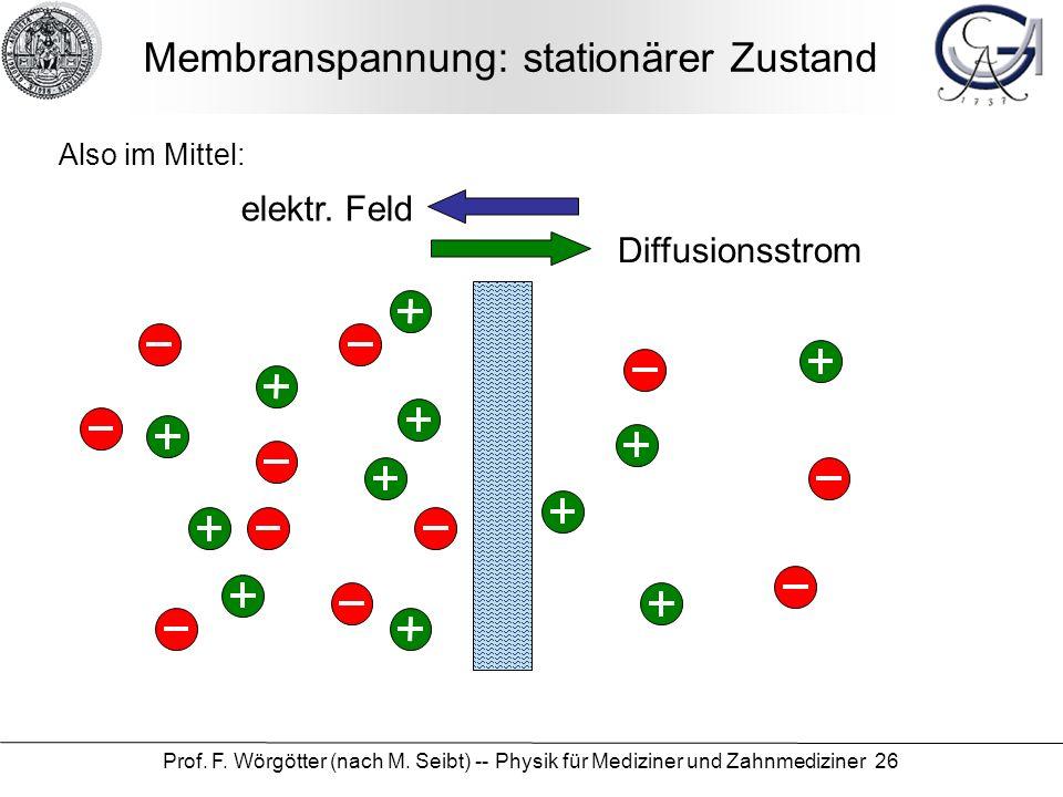 Membranspannung: stationärer Zustand