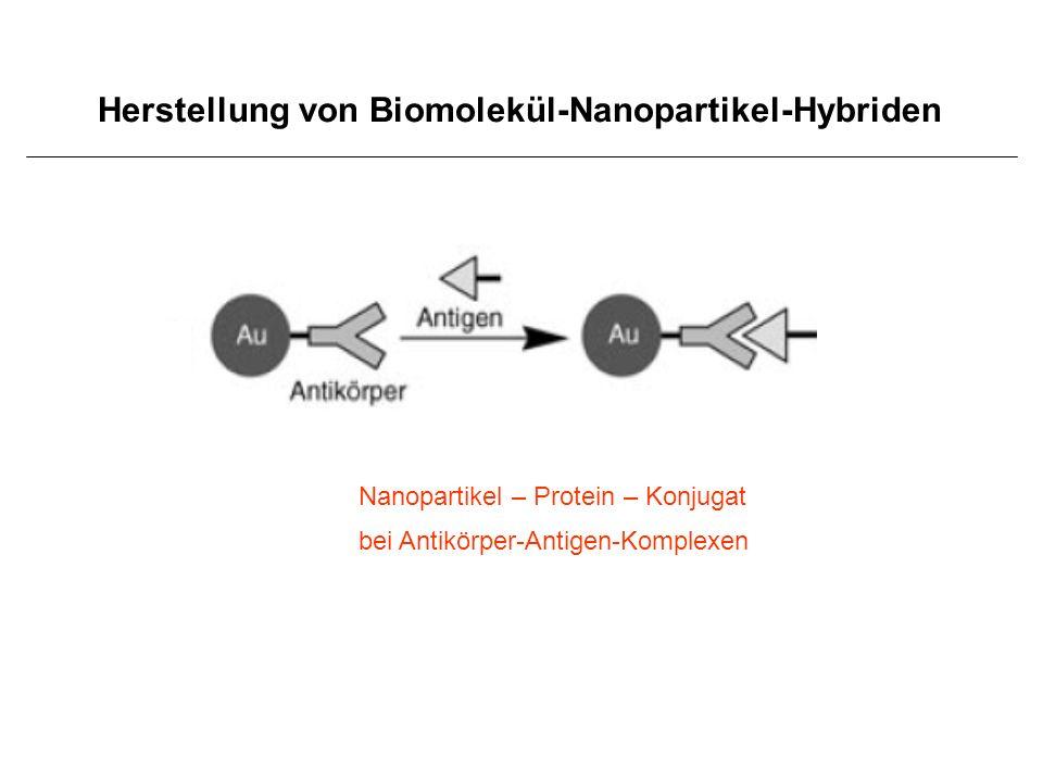 Herstellung von Biomolekül-Nanopartikel-Hybriden