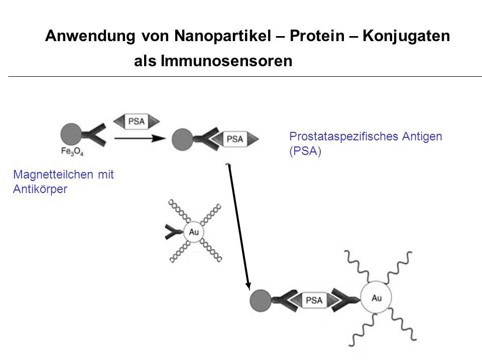 Anwendung von Nanopartikel – Protein – Konjugaten als Immunosensoren