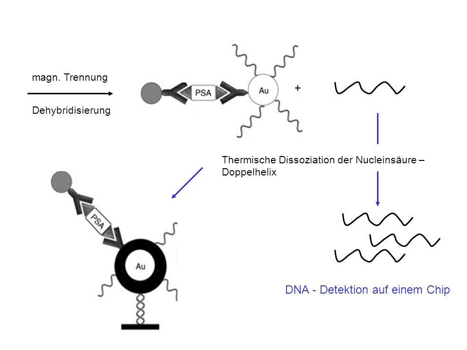 DNA - Detektion auf einem Chip
