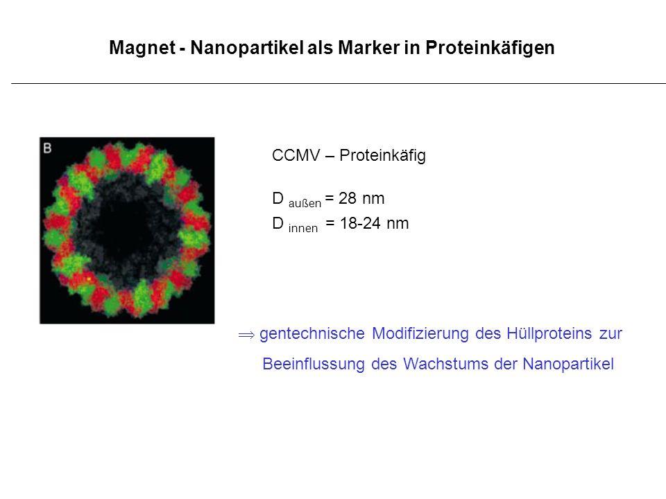 Magnet - Nanopartikel als Marker in Proteinkäfigen
