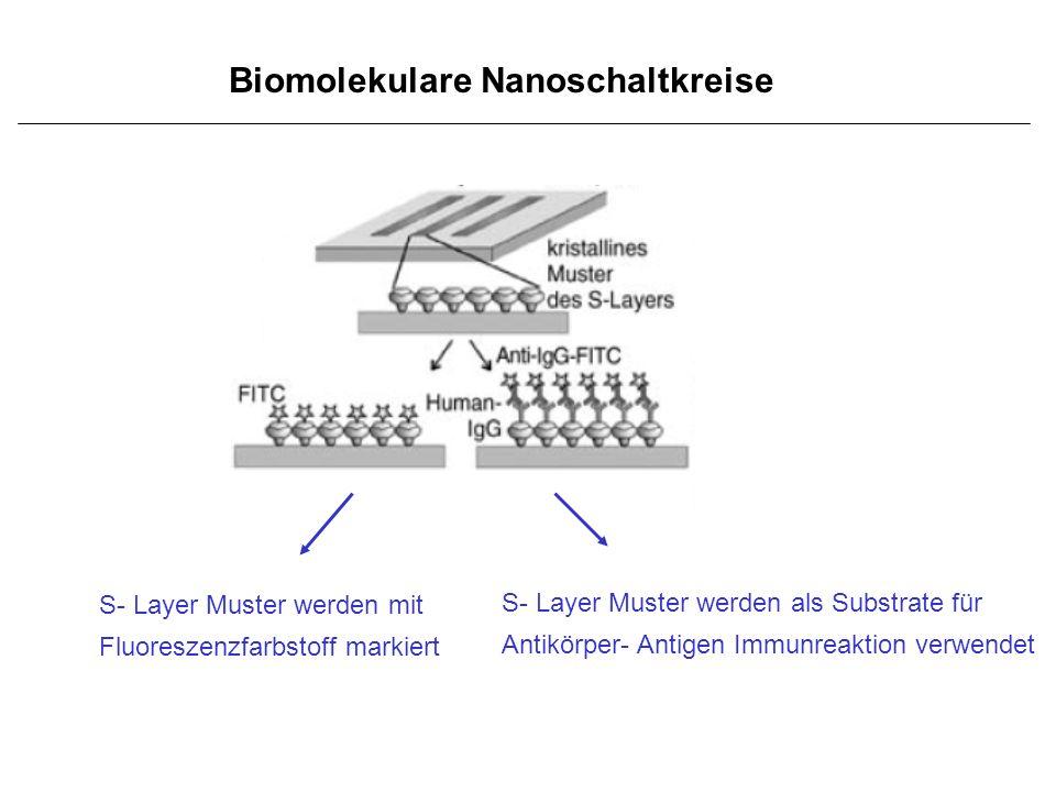 Biomolekulare Nanoschaltkreise