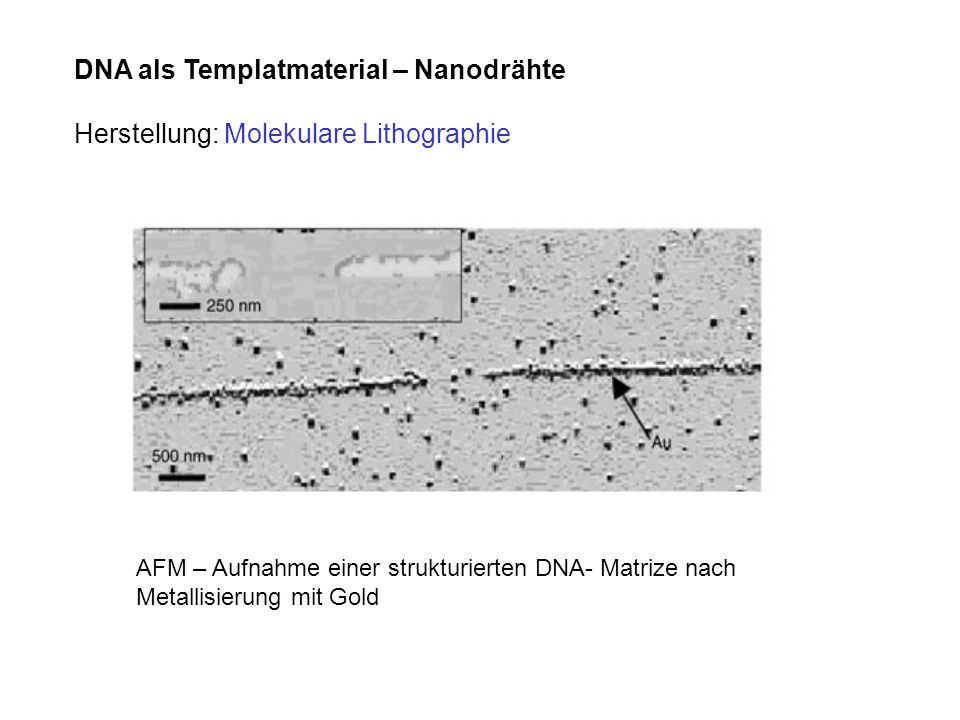 DNA als Templatmaterial – Nanodrähte