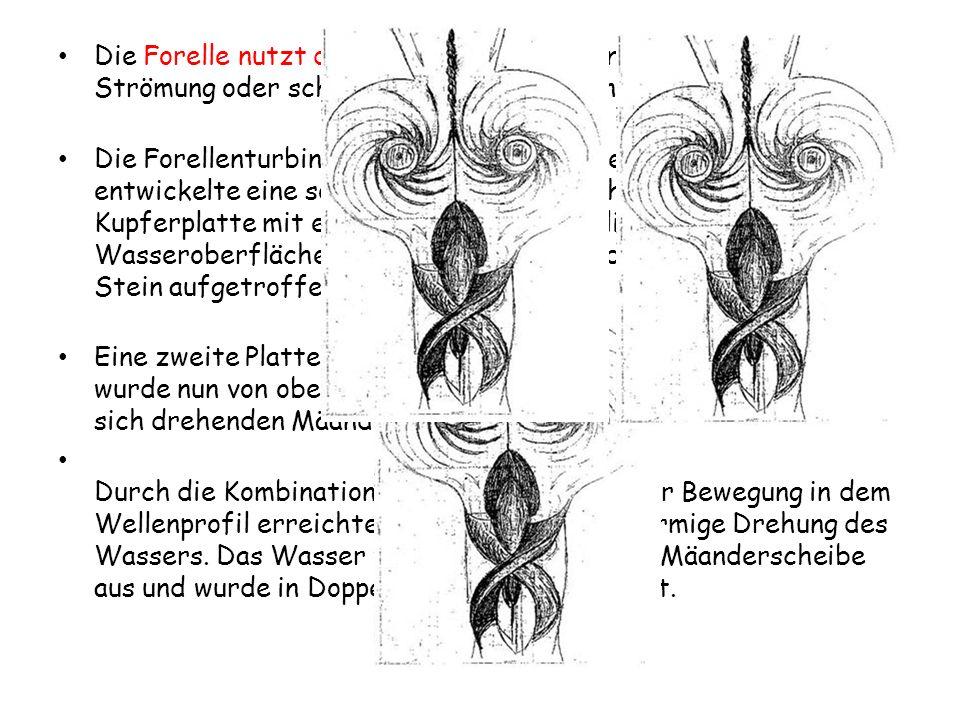 Die Forelle nutzt diesen Levitationsfluß und steht damit in der Strömung oder schwebt in Wasserfällen nach oben.