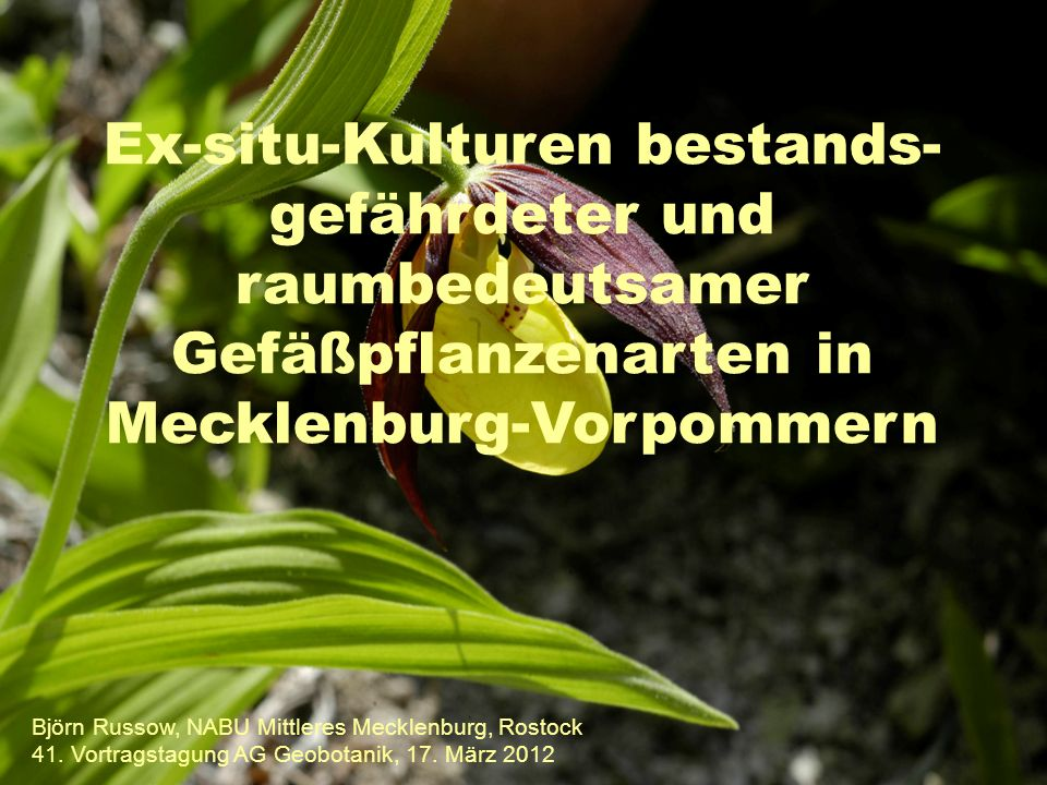 Ex-situ-Kulturen bestands-gefährdeter und raumbedeutsamer Gefäßpflanzenarten in Mecklenburg-Vorpommern