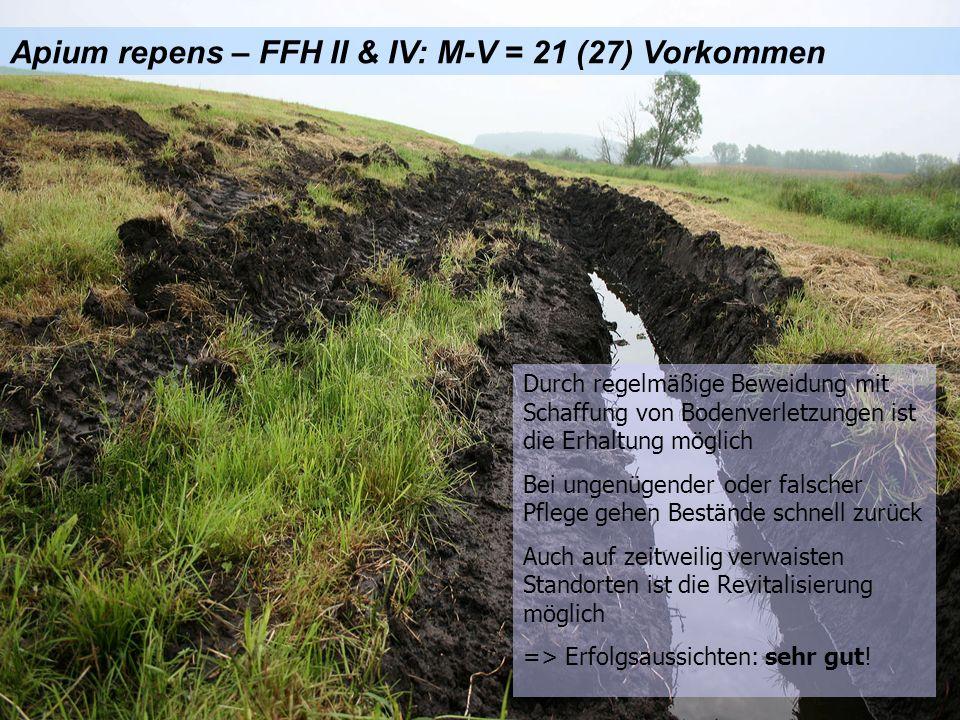 Apium repens – FFH II & IV: M-V = 21 (27) Vorkommen