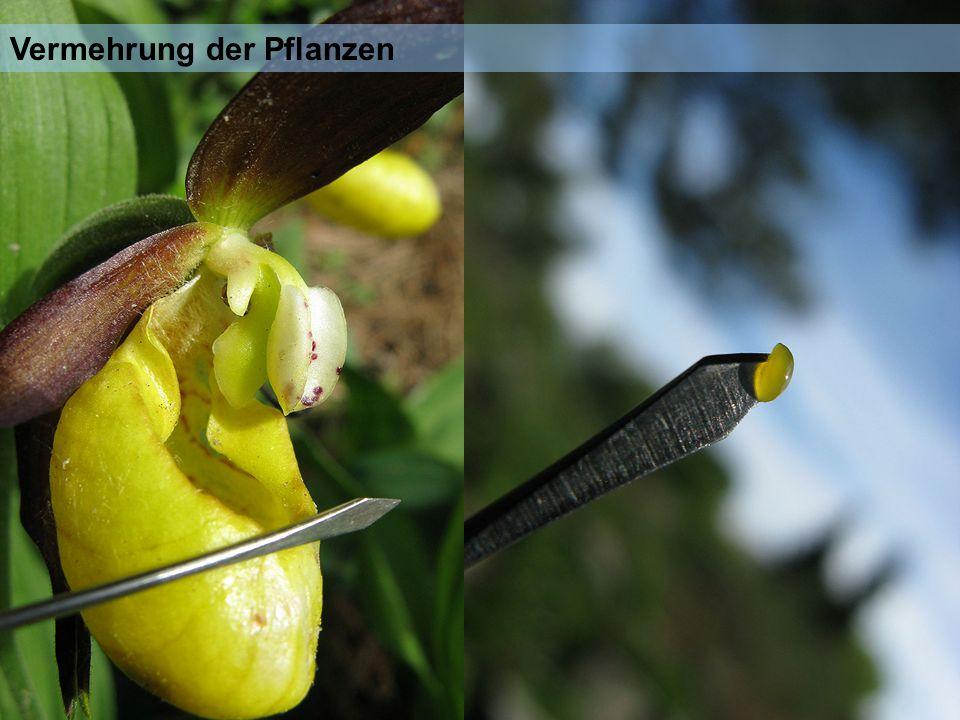 Vermehrung der Pflanzen