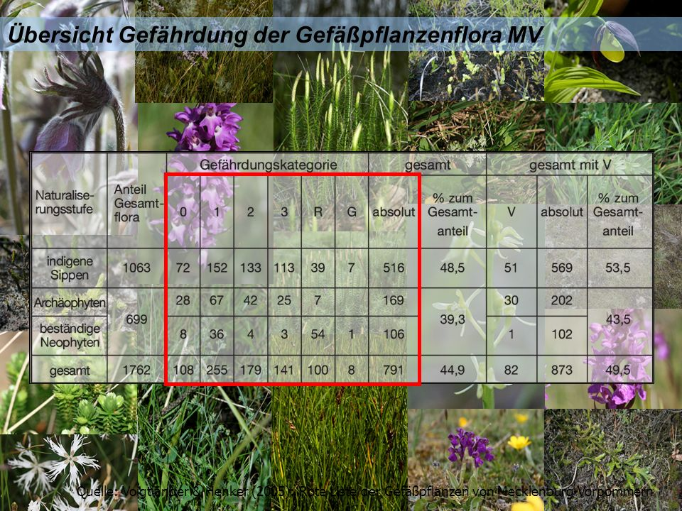 Übersicht Gefährdung der Gefäßpflanzenflora MV