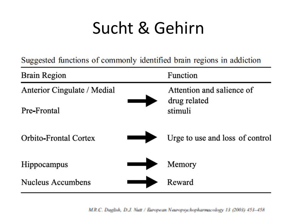 Sucht & Gehirn